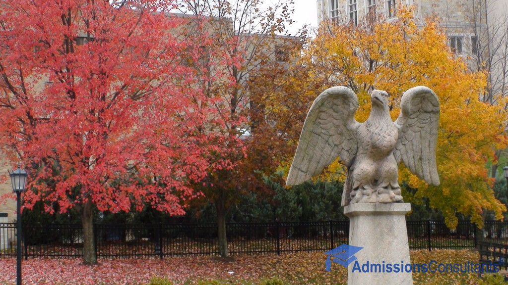 boston college eagle